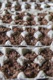 Jajeczny kartonu ogród Zdjęcie Stock