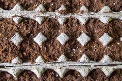 Jajeczny kartonu ogród Zdjęcia Stock