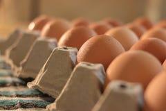 Jajeczny stojak Fotografia Stock