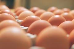 Jajeczny stojak Zdjęcia Stock