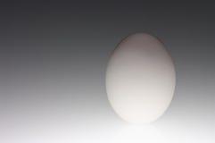 jajeczny surowy biel Fotografia Royalty Free