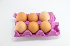 Jajecznych jajek healt proteinowy karmowy kurczak Zdjęcie Royalty Free