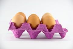 Jajecznych jajek healt proteinowy karmowy kurczak Fotografia Royalty Free