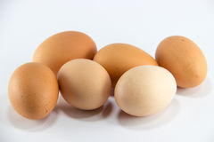 Jajecznych jajek healt proteinowy karmowy kurczak Zdjęcie Stock