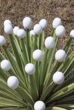 Jajek miejsca na prickles kaktus obraz stock