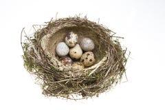 jajek trawy gniazdeczko przekręcający Obrazy Stock