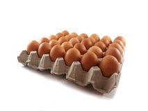 Jajka folujący w panelu Obrazy Royalty Free