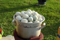 Jajka gotujący się Obraz Royalty Free