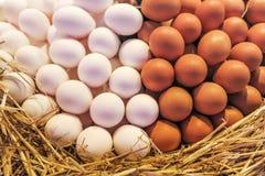 Jajka halni przy rynkiem w Barcelona Obraz Stock