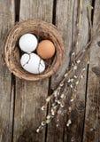 Jajka i wierzba zdjęcia stock