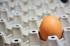 Jajka 1 jajko, układający w gniazdowym jajku, twarz jasna po zamazanego Obrazy Royalty Free