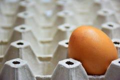 Jajka 1 jajko, układający w gniazdowym jajku, twarz jasna po zamazanego Zdjęcia Royalty Free