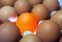 Jajka, jeden jajko ja iluminuje obrazy stock