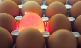 Jajka, jeden jajko ja iluminuje obrazy royalty free