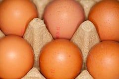 jajka kłamają w jajecznym kartonie zdjęcia stock