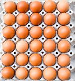 jajka kartony, jajka w pudełku Zdjęcie Royalty Free