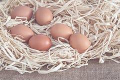 Jajka na suchej trawie Obraz Royalty Free