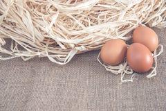 Jajka na suchej trawie Zdjęcia Stock