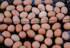 Jajka piec na grillu przy Tajlandia plażą Fotografia Stock