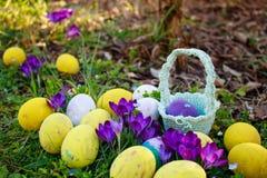 Jajka polowanie Wiosny Wielkanocny tło z barwionymi jajkami, krokus kwitnie, kosz w ogródzie obrazy stock