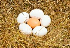 jajka sześć zdjęcia royalty free