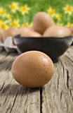 jajka uprawiają ziemię świeżego Zdjęcia Stock