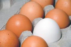 jajka uprawiają ziemię świeżego Zdjęcie Stock