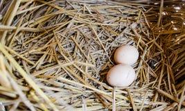Jajka w gniazdeczku Fotografia Stock