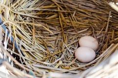 Jajka w gniazdeczku Obrazy Royalty Free
