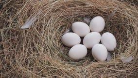 Jajka w gniazdeczku zbiory