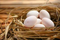 Jajka w gniazdeczku na naturze, Świezi jajka dla gotować lub surowy materiał, świeży jajka tło Zdjęcia Stock