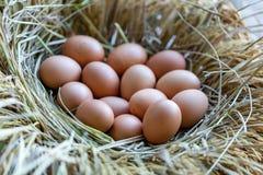 Jajka w gniazdeczku robić słoma Zdjęcia Royalty Free