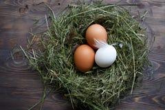 Jajka w gniazdowych kurczaków jajkach Gniazdeczko na drewnianym tle Zdjęcie Royalty Free