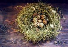 Jajka w gniazdowych przepiórek jajkach Gniazdeczko na drewnianym tle Zdjęcia Royalty Free