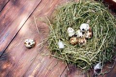 Jajka w gniazdowych przepiórek jajkach Gniazdeczko na drewnianym tle Zdjęcie Stock