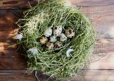 Jajka w gniazdowych przepiórek jajkach Gniazdeczko na drewnianym tle Zdjęcia Stock