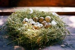 Jajka w gniazdowych przepiórek jajkach Gniazdeczko na drewnianym tle Obraz Stock