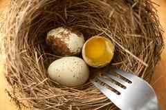 Jajka w gniazdowym zbliżeniu Obraz Stock