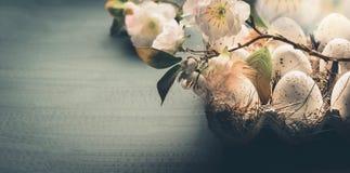 Jajka w kartonu pudełku z wiosną kwitną, frontowy widok, kopii przestrzeń, sztandar zdjęcie royalty free