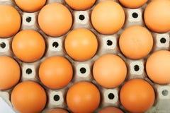 Jajka w pudełku Zdjęcie Stock