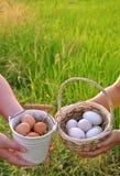 Jajka w ryżu pola tle Wielkanocny festiwal Fotografia Royalty Free
