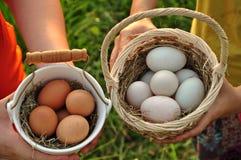 Jajka w ryżu pola tle Wielkanocny festiwal Zdjęcie Royalty Free
