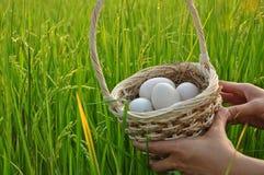 Jajka w ryżu pola tle Wielkanocny festiwal Obraz Royalty Free