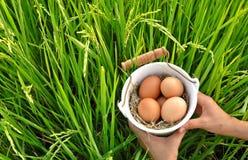 Jajka w ryżu pola tle Wielkanocny festiwal Fotografia Stock