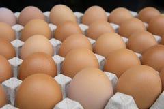 Jajka w skrzynce zdjęcie stock