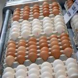 Jajka w tacach Obrazy Royalty Free