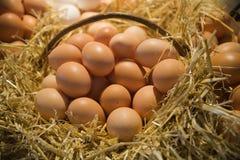 jajka świezi Fotografia Royalty Free