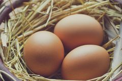 Jajka z kurczaków piórkami w jajniku obraz royalty free