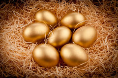 jajka złoci Zdjęcie Royalty Free
