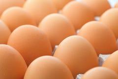 Jajka zamknięty up fotografia royalty free